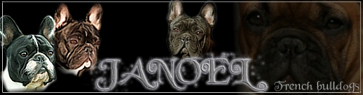 "»JANOEL""FRENCH BULLDOGS KENNEL"